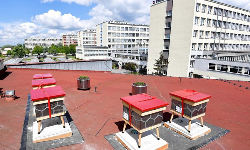 Pszczoły na dachu Politechniki czyli Światowy Dzień Pszczół 2021